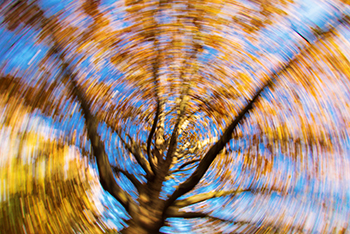 trippy_tree_dizziness_350