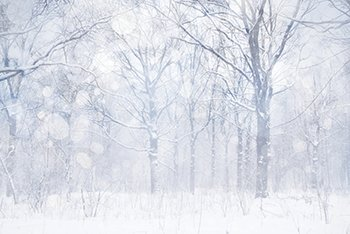 Introduction Image_Winter