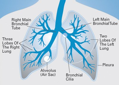 About Lung Cancer | Swedish Medical Center Seattle and Issaquah
